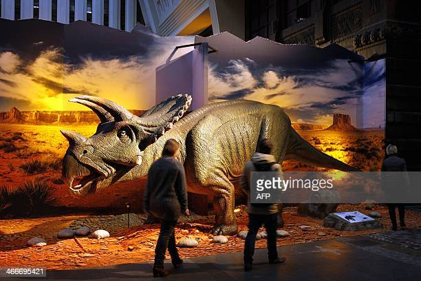 A life size model of a Triceratops is part of the exhibition 'Living Dinosaurs' inside a former post office in Rotterdam The Netherlands on February...