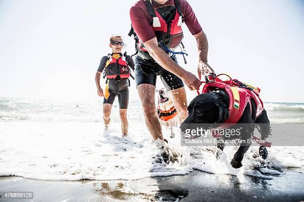 Lifeguard dog working on beach, Pisa, Italy