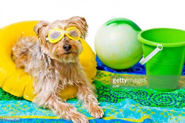 life's a beach - august stock pictures, royalty-free photos & images