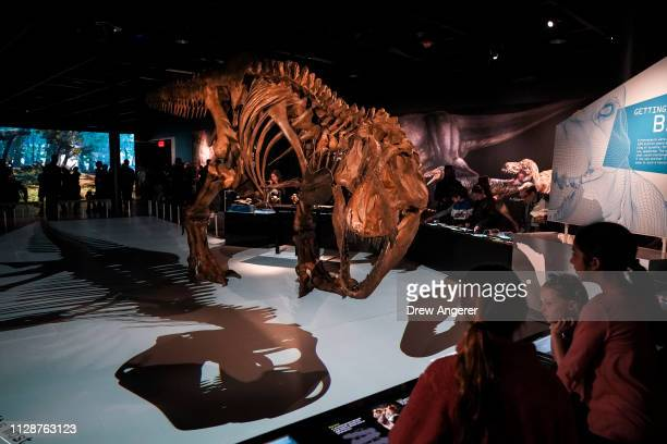 A lifesize skeleton model of a Tyrannosaurus rex dinosaur stands in a new exhibit called 'T Rex The Ultimate Predator' at the American Museum of...