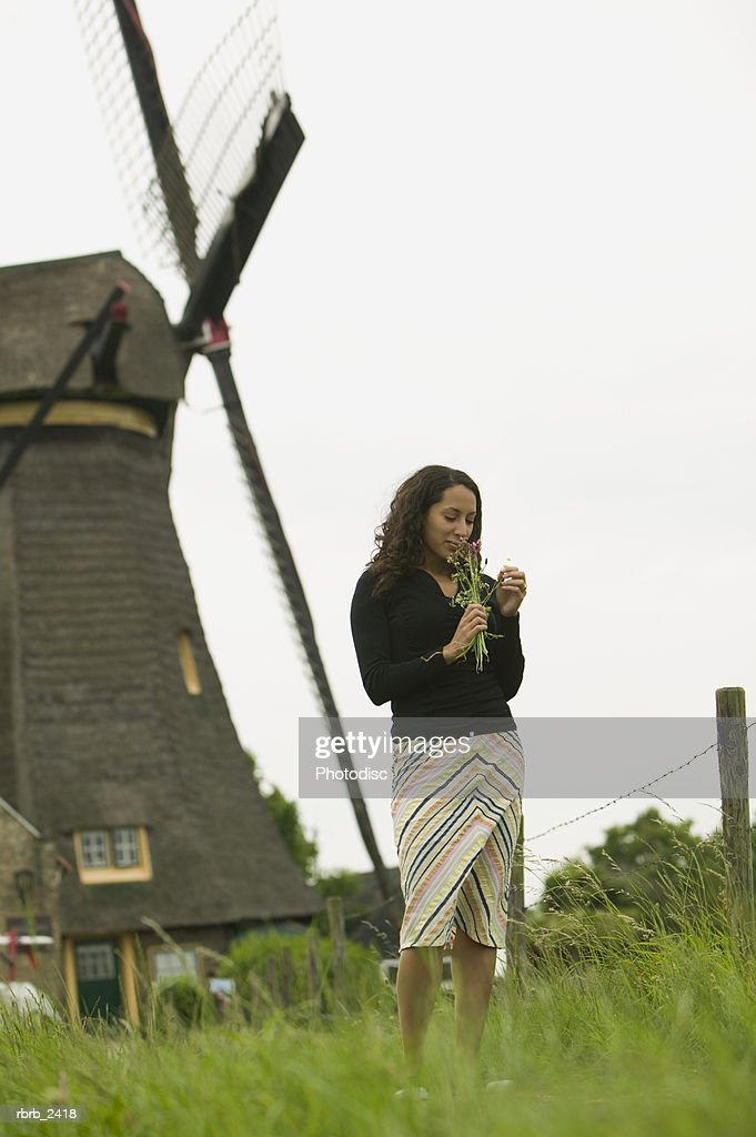 lifestyle shot of a young adult woman as she picks wild flowers in front of an old world windmill : Foto de stock