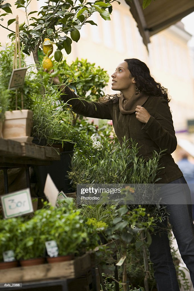 lifestyle shot of a young adult woman as she shops for various trees and plants in an outdoor market : Foto de stock
