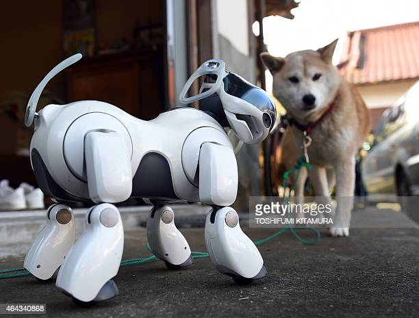 LifestyleelectronicsJapanrobotSony by Miwa Suzuki AIBO plays beside 'Kuma' the Shiba Inu after the funeral for 19 Sony's pet robot AIBOs at the...