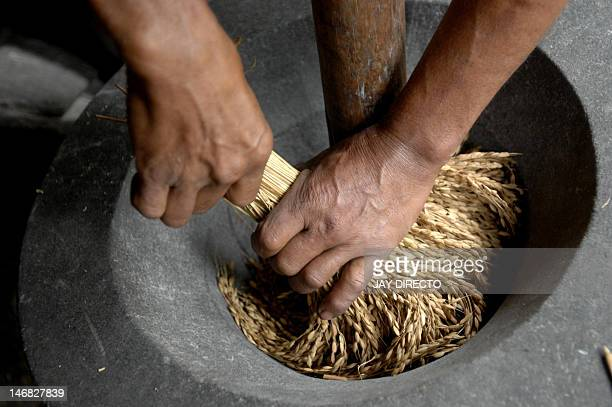 LifestylePhilippinestourismheritagericeFEATURE by Cecil Morella This photo taken 13 November 2007 shows rice farmer Menong Benongan readying a bundle...