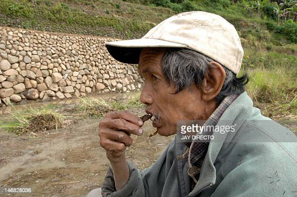 LifestylePhilippinestourismheritagericeFEATURE by Cecil Morella This photo taken 13 November 2007 shows rice farmer Nestor Buccah chewing a tobacco...