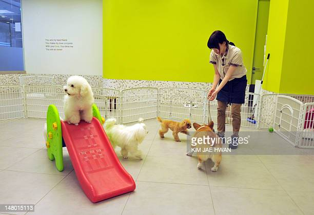 LifestyleSKoreaanimalsFEATURE by Nam YouSun This photo taken on June 12 2012 shows cats and dogs playing at an exercise area of Irion a luxury...