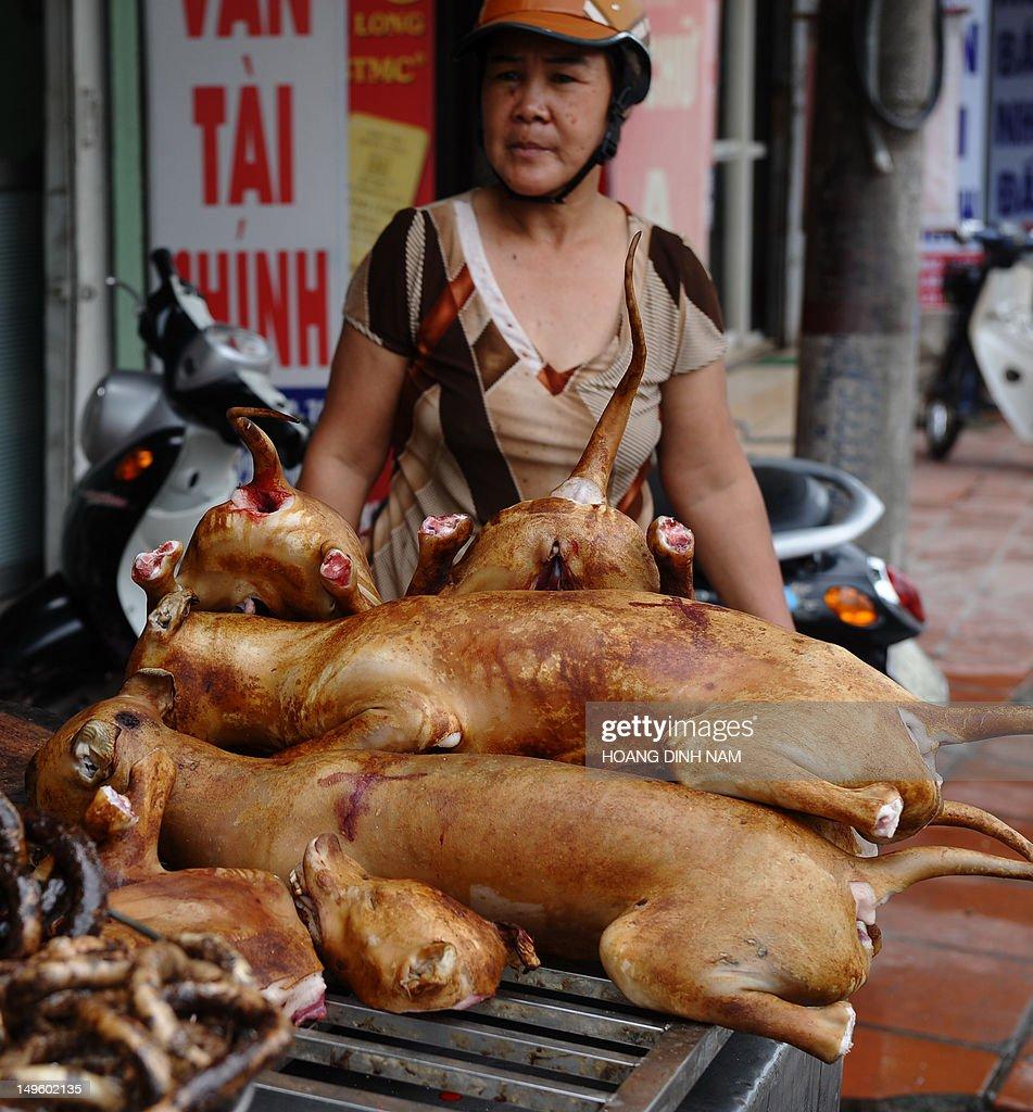 VIETNAM-LIFESTYLE-SOCIETY-ANIMAL : News Photo