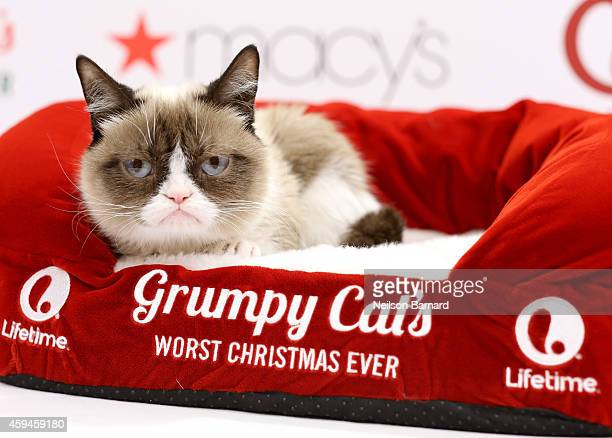 Lifetime celebrates Grumpy Cat's Worst Christmas Ever at Macy's Herald Square on November 23 2014 in New York City