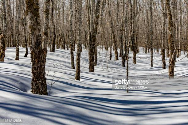 light and shadow - barry wood stock pictures, royalty-free photos & images