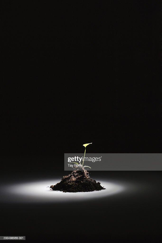 Light Beam On Seedling In Soil In Dark Room Stock Photo