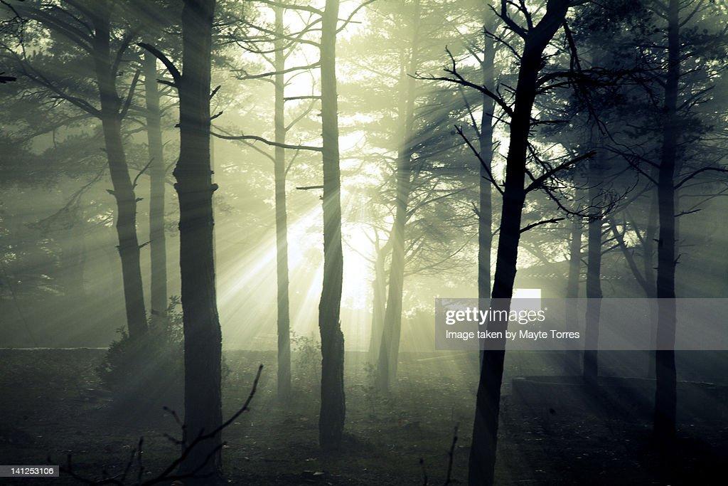 Light beams in wood : Stock Photo