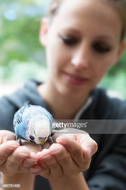 Light blue budgerigar on hands of a woman