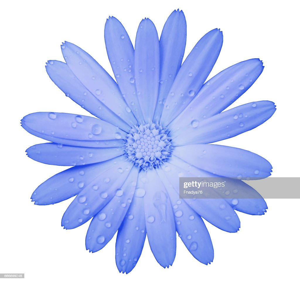 Light Blue Flower With Clipping Path Isolated On White Background ...