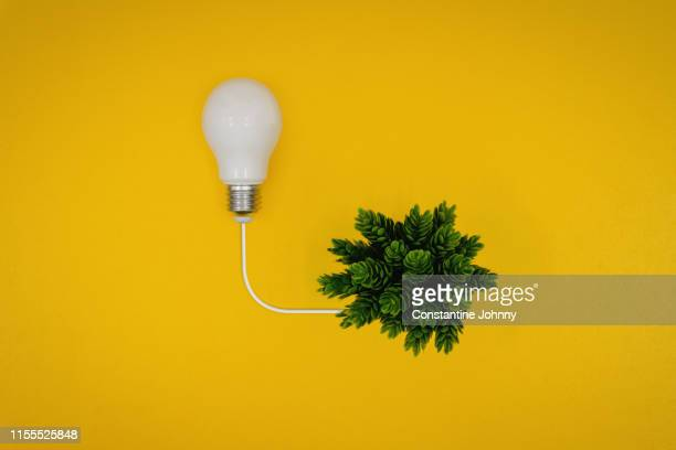 light bulb and green plant. green energy concept. - power supply stock pictures, royalty-free photos & images