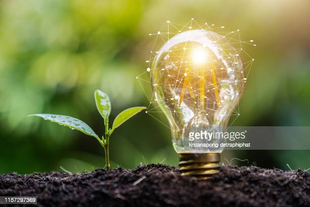 light bulb and tree,growth concept - power supply stock pictures, royalty-free photos & images