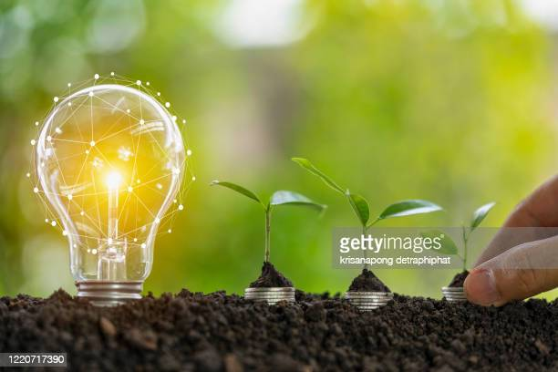 light bulb and tree,growth concept - opportunity stock pictures, royalty-free photos & images