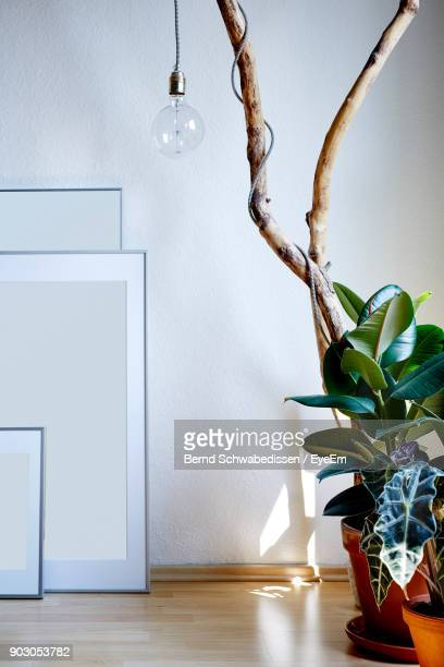 Light Bulb Hanging On Potted Plant On Floor At Home
