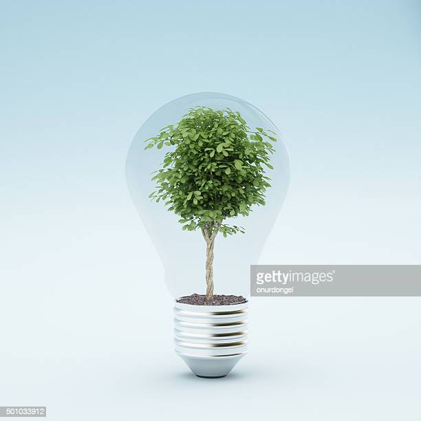light bulb with plant - create cultivate stock pictures, royalty-free photos & images