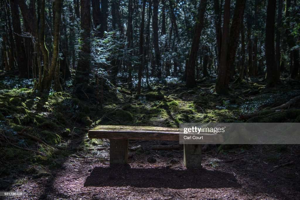 Light falls on a moss-covered bench in Aokigahara forest on March 14, 2018 in Fujikawaguchiko, Japan. Aokigahara forest lies on the on the northwestern flank of Mount Fuji and in recent years has become known as one of the world's most prevalent suicide sites. The density of the forest is believed to be a contributing factor with people often tying string to trees to find their way back to a path in case they change their mind. In 2010, officials recorded more than 200 attempted suicides in the forest with attempts said to increase during the end of the Japanese fiscal year. In recent years, local officials have stopped publicising the numbers in an attempt to decrease Aokigahara's association with suicide.