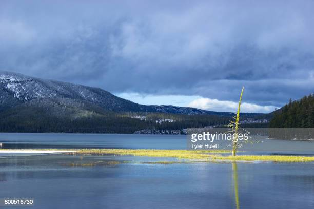 light hits tree in lake in winter - snag tree stock pictures, royalty-free photos & images