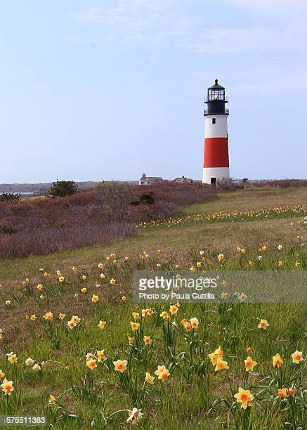 light houses - paula guttilla stock pictures, royalty-free photos & images