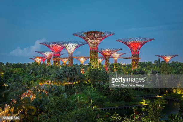 Light illuminations at Gardens By The Bay  -Singapore