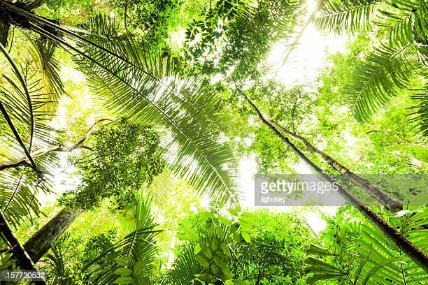 Lumière dans la jungle