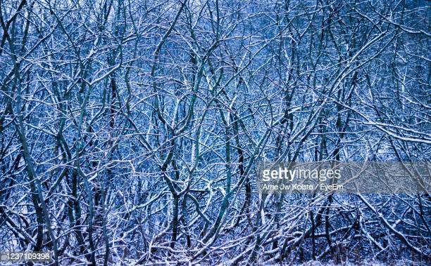 light new snow on a pattern of intertwined twigs. - arne jw kolstø stock pictures, royalty-free photos & images