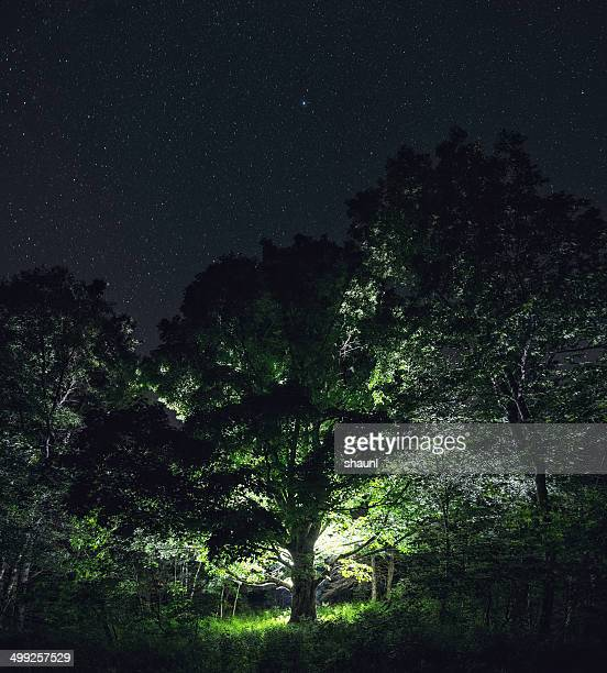 light of the elm - elm tree stock pictures, royalty-free photos & images