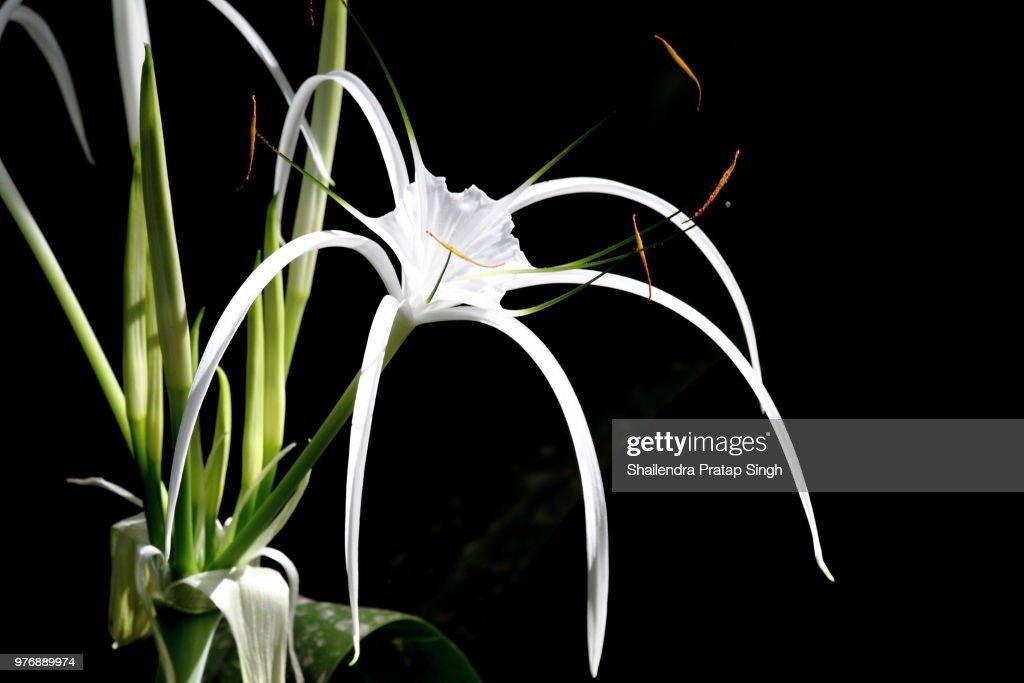 Light on flower. : Stock Photo