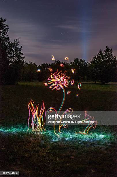Light Painting: Flower and Mushrooms in the Night
