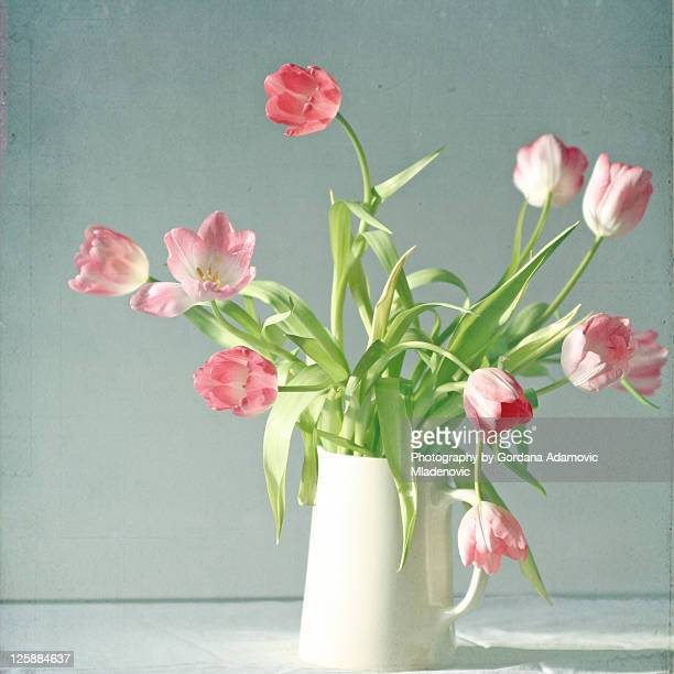 Light pink tulips in white ceramic pitcher