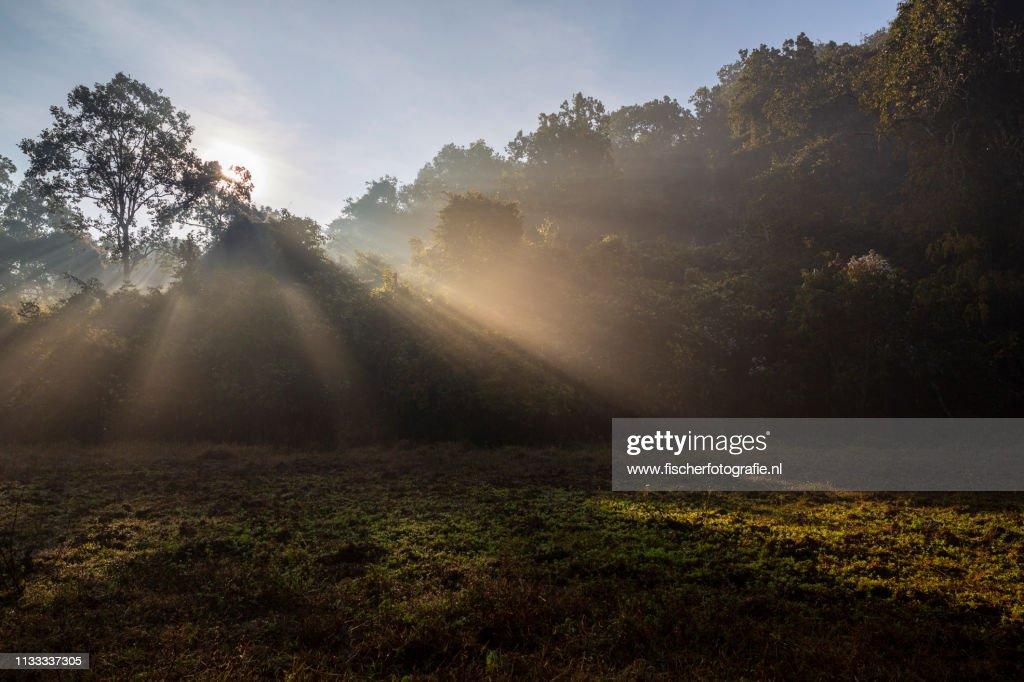Light rays during sunrise in remote Odisha : Stock Photo