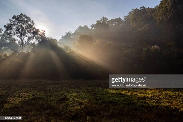 light rays during sunrise in remote odisha - reizen stock pictures, royalty-free photos & images