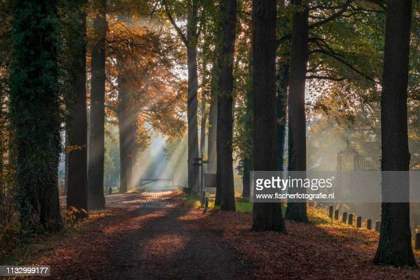 light rays - zonsopgang stock pictures, royalty-free photos & images