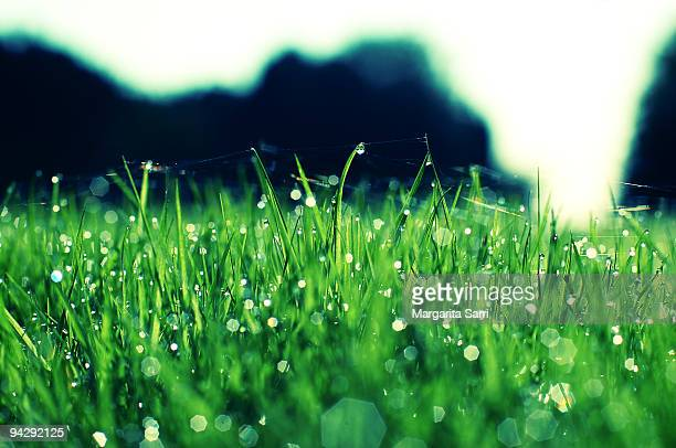 light reflections on grass dew