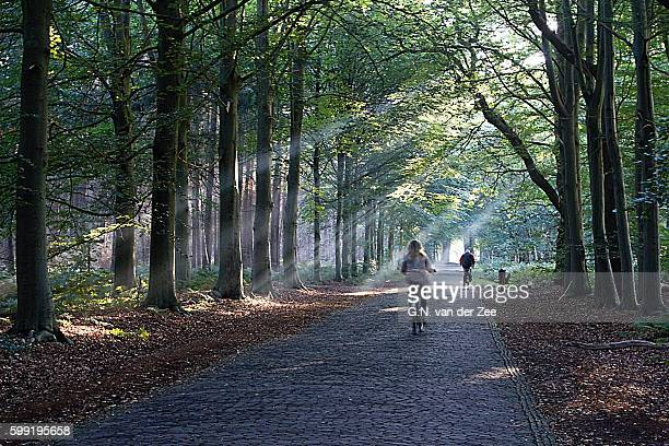 light riders - drenthe stock pictures, royalty-free photos & images
