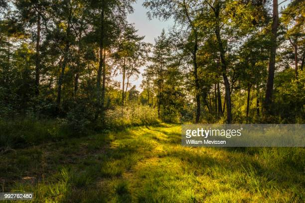 light & shade - william mevissen stock pictures, royalty-free photos & images