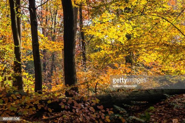 light & shadow - william mevissen fotografías e imágenes de stock