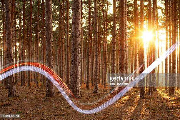 Light swoosh in woods.