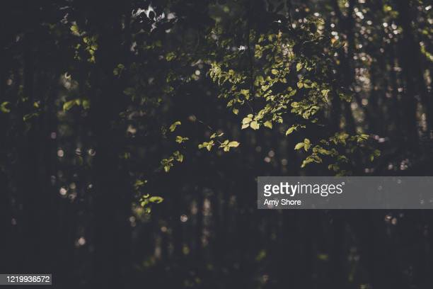 light through woodland leaves - lush stock pictures, royalty-free photos & images
