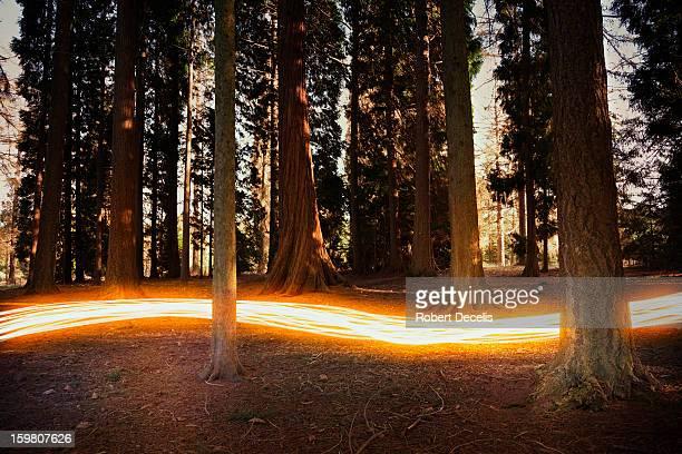 Light trail passing around trees.