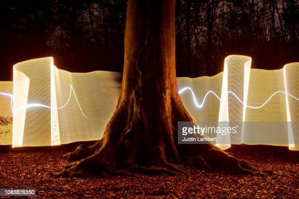 light trail passing behind a tree in the forest at night - electrical component stock photos and pictures