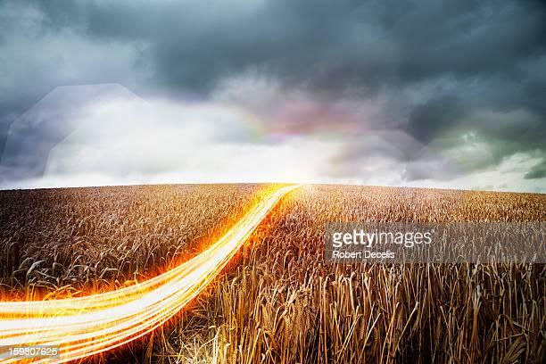Light trails moving across wheat field.