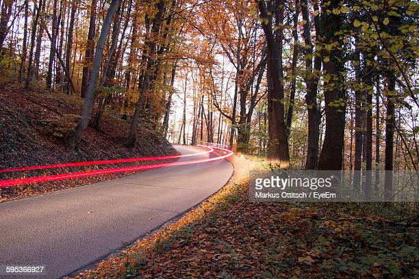 Light Trails On Road In Forest