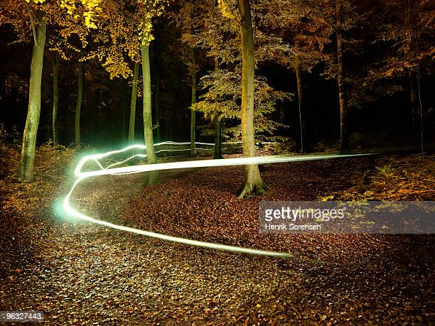 Light trails through autumn forest at night