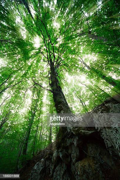 Leichte Trog Tree