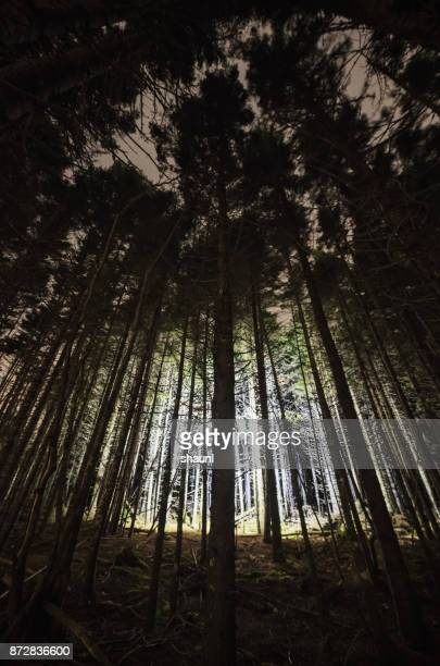 Light Within the Spruce