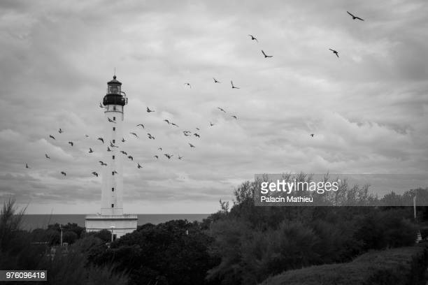 lighthouse and flock of birds, biarritz, france - biarritz stock pictures, royalty-free photos & images