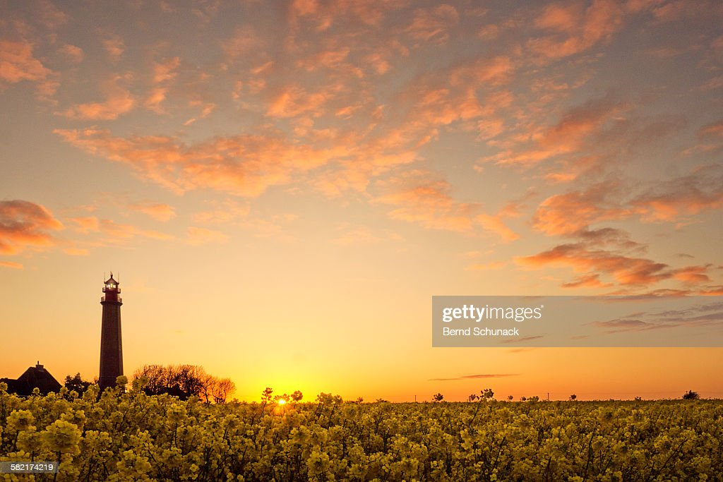 Lighthouse And Rape Field Sunset : Stock-Foto
